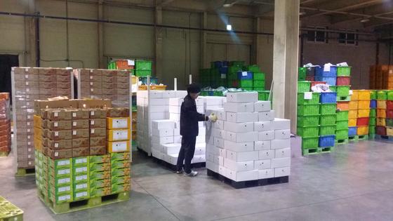 지난 10일 오후 북한으로 보내질 제주 감귤을 포장할 하얀색 감귤 박스가 서귀포시 중문농협 APC 센터 선과장에 쌓여있다.[사진 중문농협 APC센터]