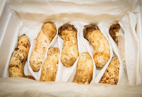 지난 9월 평양 남북정상회담 당시 북측이 선물한 송이버섯. [사진 청와대]