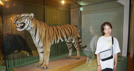 한국 호랑이인 아무르 호랑이(시베리아 호랑이). 지난 1929년 경주 대덕산에서 마지막으로 발견. 이후 1996년 4월 환경부서 공식 멸종 발표했다.