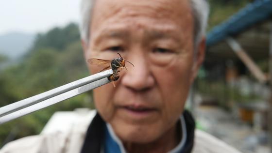 지난달 16일 경남 창원시 회원구 내서읍 안성리 양봉장에서 잡은 외래종 '등검은말벌'을 서상돌(81) 씨가 들어보고 있다. 송봉근 기자