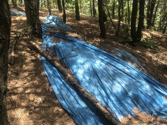 푸른 비닐 덮혔던 광해군 태실, 16년만에 문화재 등록 추진
