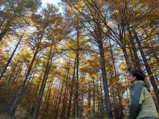 지난달 25일 찾은 태백산국립공원의 일본잎갈나무 숲. 나무가 빽빽하게 들어서 햇빛이 숲 바닥까지 닿지 않아 키 작은 식물들은 보기 어렵다. 태백산=박진호 기자