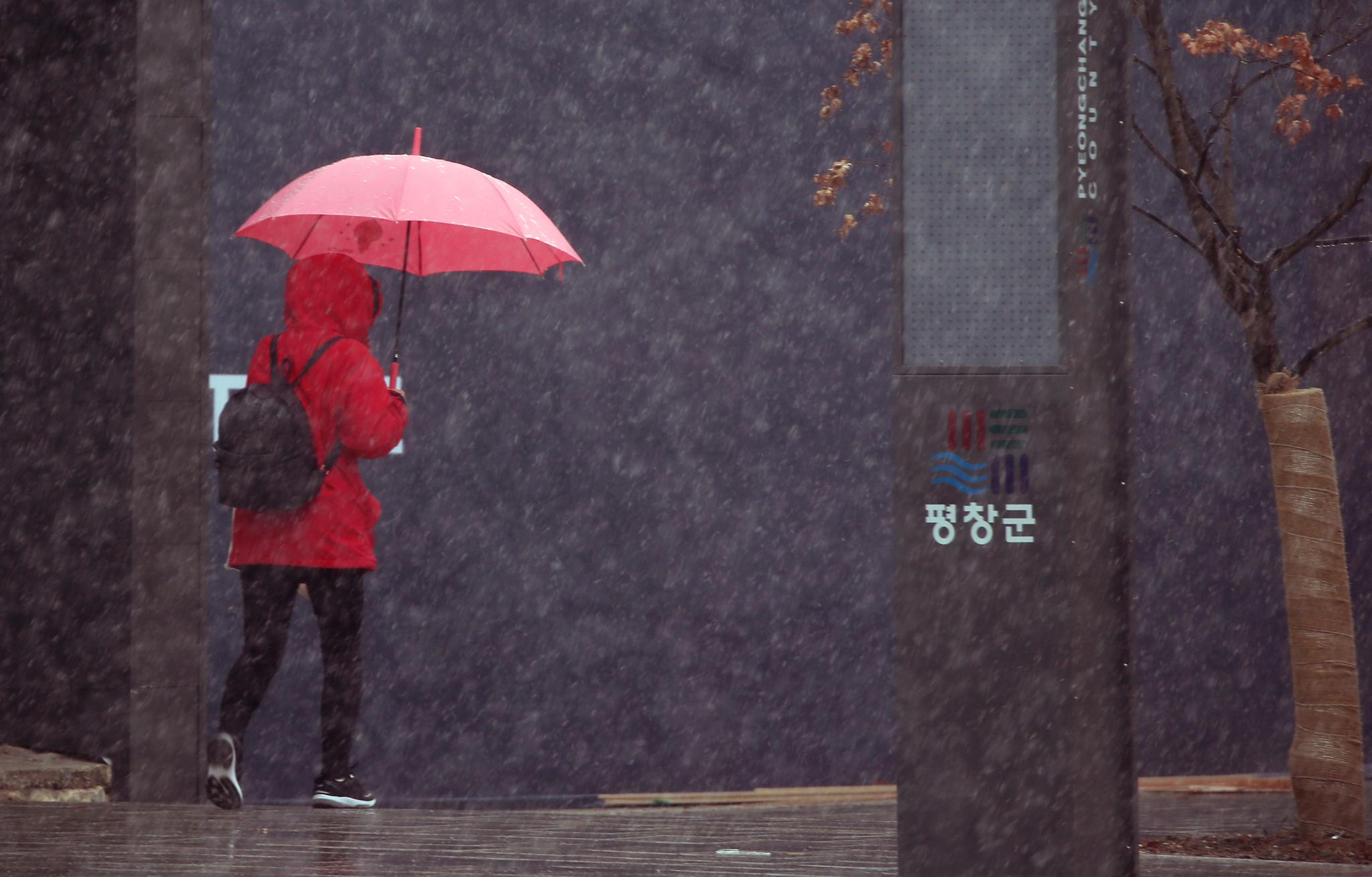 21일 오후 강원도 평창군 대관령면에서 한 시민이 눈을 맞으며 길을 걷고 있다. [연합뉴스]