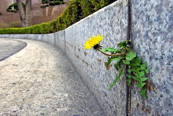 아파보면 안다, 멍든 몸에도 꽃이 피어난다는 것을