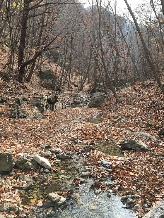 주왕산의 가을은 떨어진 낙엽 밟는 소리에 스며들어있었다. [사진 하만윤]