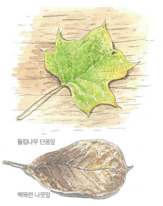 [소년중앙] 황경택 쌤과 자연이랑 놀자 9.낙엽