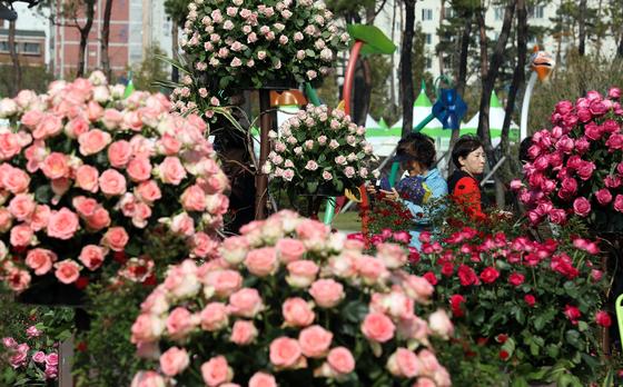 부산시민공원 다솜마당 일원에서 열린 '2018 부산정원박람회'에서 시민들이 장미 정원을 살펴보고 있다. [뉴스1]