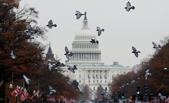 5일(현지시간) 비들기떼가 위싱턴 의사당 하늘을 날고 있다. [로이터=연합뉴스]