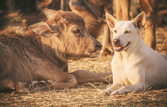 소상과 개상은 서로 도와주는 동물관상이며 '상생 관상' 이다.