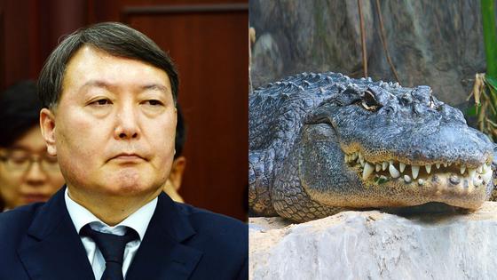 윤석열 서울중앙지검장은 변함없이 믿음직하고 우직한 '악어상'이다.