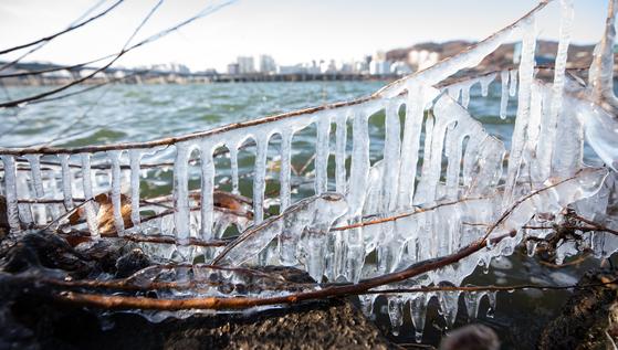 올 겨울 두 번째 한파주의보가 발효된 지난 7일 서울 광나루한강공원 강변에 고드름이 얼어 있다. [뉴스1]