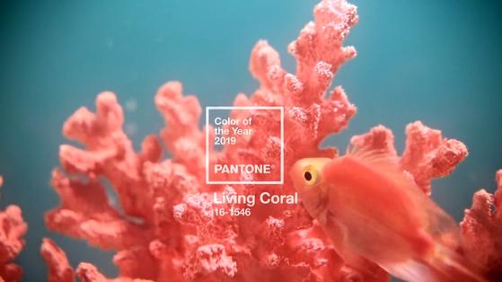 팬톤이 지난 6일 2019년 '올해의 색'으로 선정한 리빙 코랄. [팬톤 공식 홈페이지 캡처]