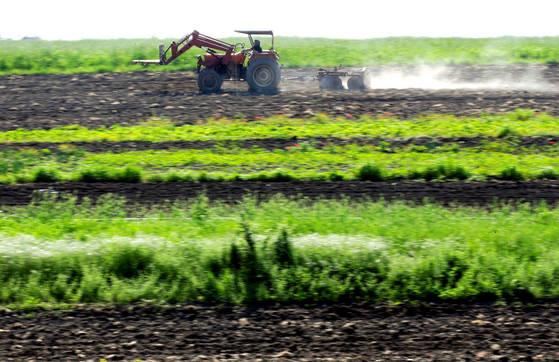 이탈리아의 한 농장 모습. 이탈리아 마피아들이 농업에까지 손을 대고 있다. [로이터=연합뉴스]