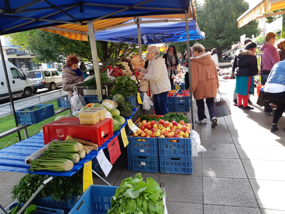 체코 프라하 Tyl 광장의 작은 노천시장. 채소같은 간단한 식재료를 구할 수 있다. [사진 박헌정]