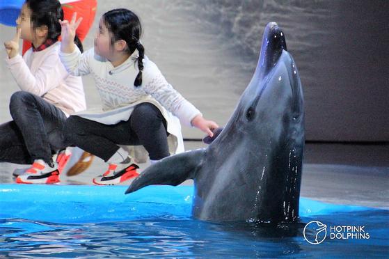큰돌고래 태지가 제주 퍼시픽랜드에서 사람들과 만나고 있는 모습 [핫핑크돌핀스 제공=뉴스1]