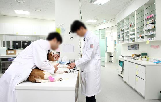서울에서 동물병원을 운영하는 수의사 김 원장에게서 연락이 왔다. 이제 막 병원이 자리 잡기 시작했는데 건물주가 계약이 끝나는 올해 말까지 상가를 비워달라고 했다고 한다. (내용과 연관없는 사진) [중앙포토]