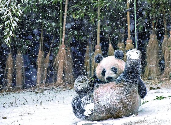 눈이 즐거운 판다 ... 서울 오늘 아침 영하 7도