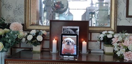 13일 오후 1시 경기 김포시 동물장묘업체 '페트나라'에서 60대 부부의 반려견 하니의 장례식이 진행됐다. [사진 페트나라]