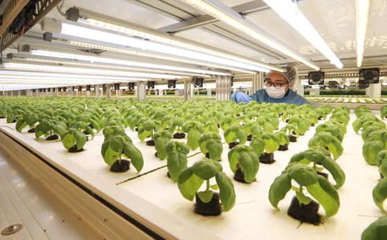 미래원의 6단형 식물공장. 내년에는 규모를 배로 늘리고 자동화 라인도 본격 도입한다.