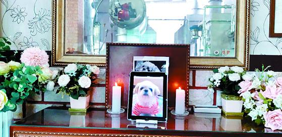 13일 동물장묘업체 '페트나라'에서 60대 부부의 반려견 하니의 장례식이 진행됐다. [사진 페트나라]