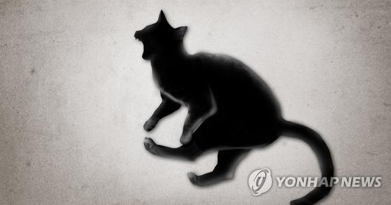 동물심리학자에 의하면 로드킬을 당하는 동물 중 으뜸이 고양이라고 한다. 자신이 이 세상에서 제일 빠른 줄 알고 차가 와도 피하지 않는다는 것이다. [연합뉴스]