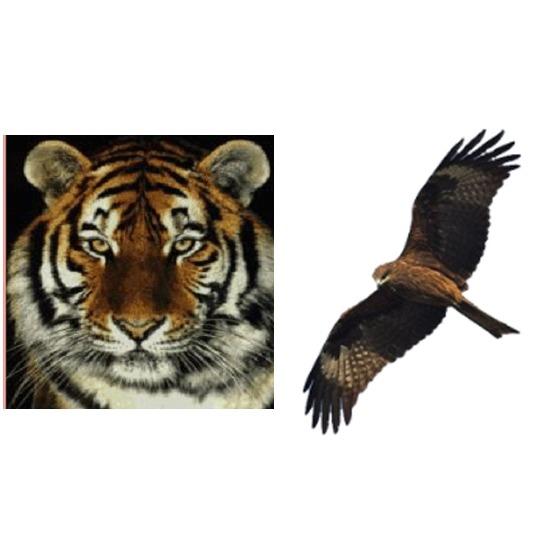 국군기무사령부의 상징인 호랑이와 군사안보지원사령부의 상징인 솔개