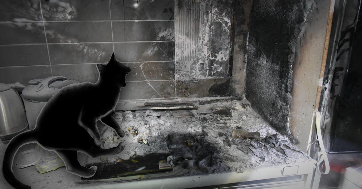 18일 오후 9시7분쯤 사람이 없는 집안에서 전기레인지가 작동해 화재가 발생하는 사고가 발생했다. 사진은 불에 탄 전기레인지 주변과 고양이 일러스트레이션 합성 이미지. [대전남부소방서, 중앙포토]