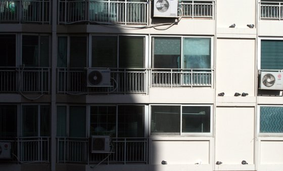 서울 노원구의 한 아파트 외벽에서 비둘기들이 그늘을 피해 양지볕에 웅크리고 있다. [뉴시스]