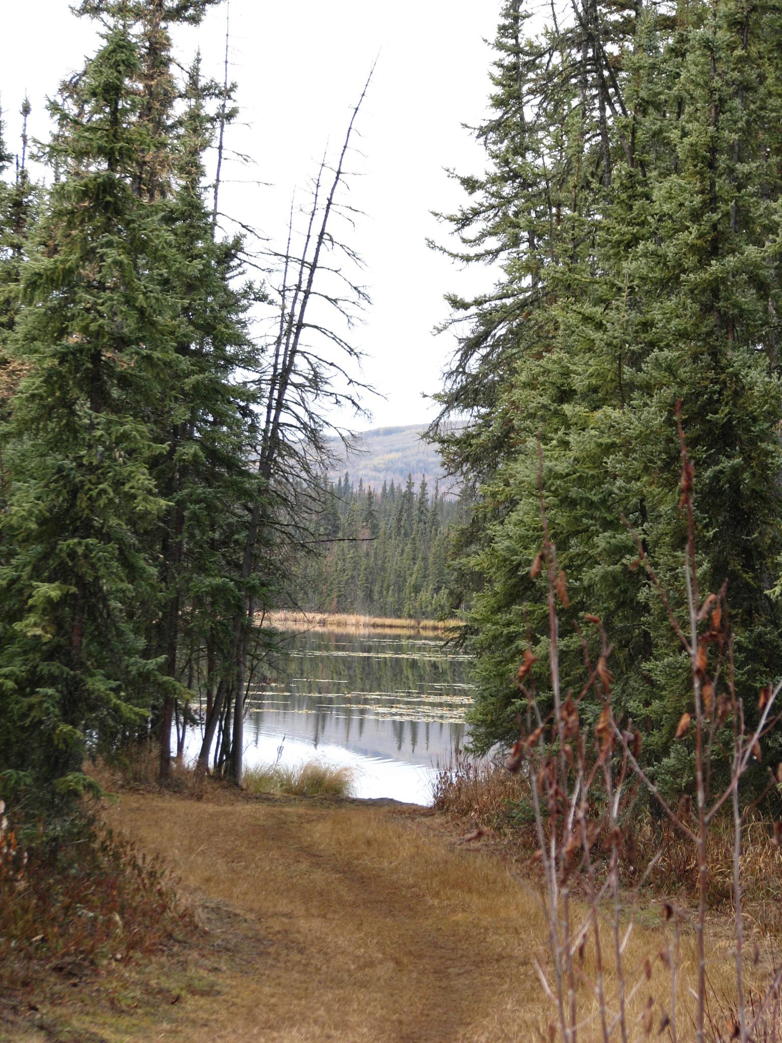 알래스카 영구동토층이 녹아내리면서 호수가 점점 더 커지고 있다. 얼었던 땅이 녹으면서 그 위에 서있는 나무가 기울어지는 경우도 있다. 강찬수 기자