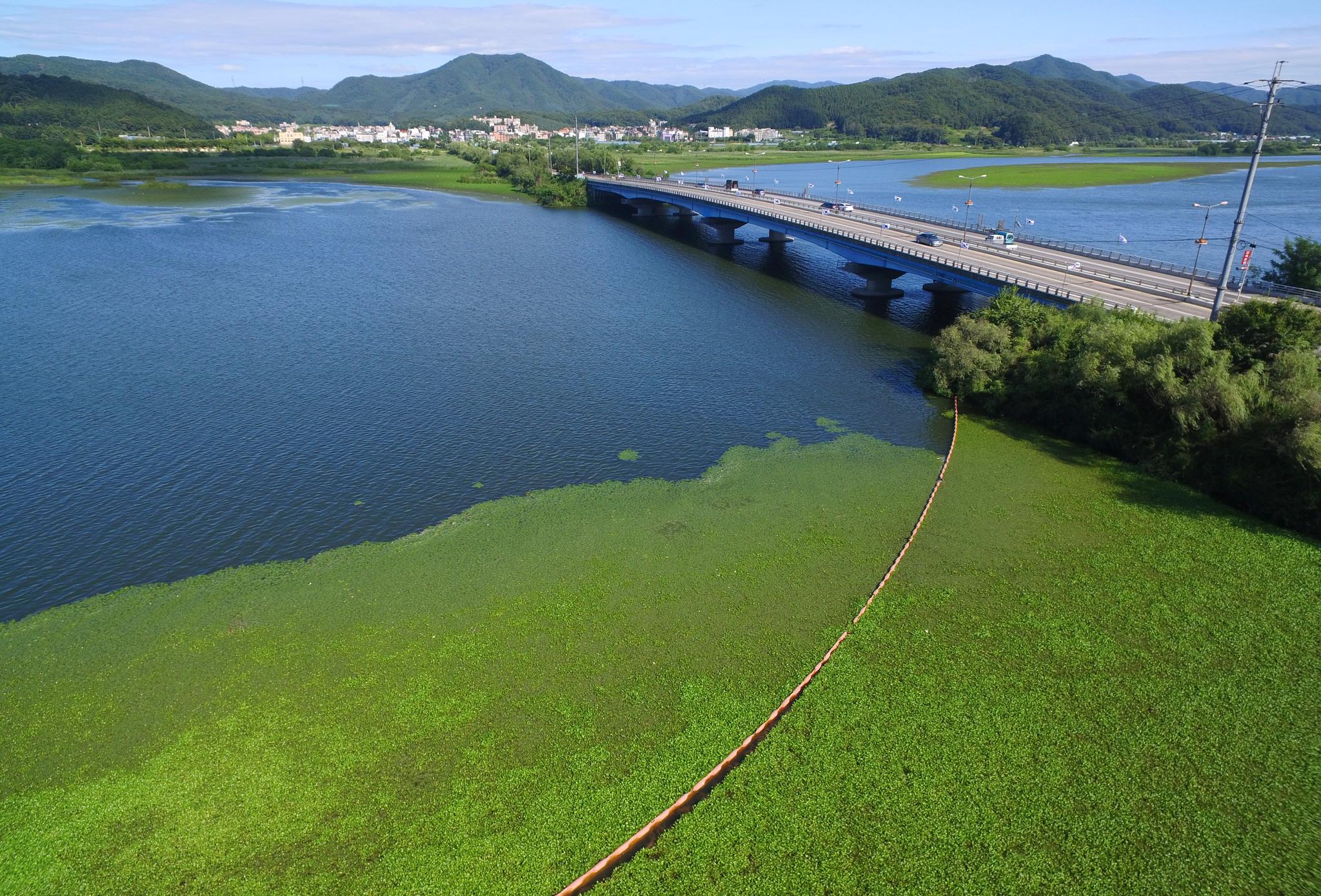 폭염이 극심했던 지난 8월 경기도 광주시 광동교 인근 팔당호가 녹조로 덮혀 있다. [뉴스1]