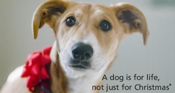 영국의 동물보호단체 도그 트러스트(Dogs trust)는 40년 전부터 크리스마스 선물로 강아지를 주고 받는 것을 반대하는 캠페인을 펼쳐왔다. [사진 도그 트러스트]