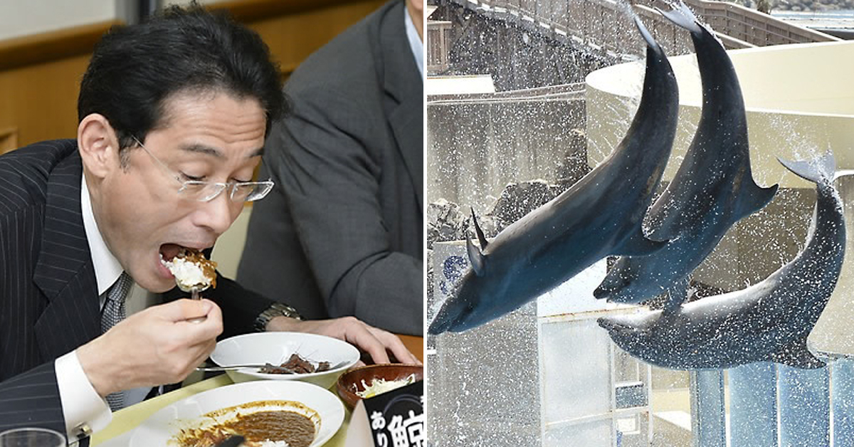 고래고기 카레 시식하는 기시다 후미오 일본 전 외무상(왼쪽)과 일본 수족관의 돌고래(오른쪽) [연합뉴스]