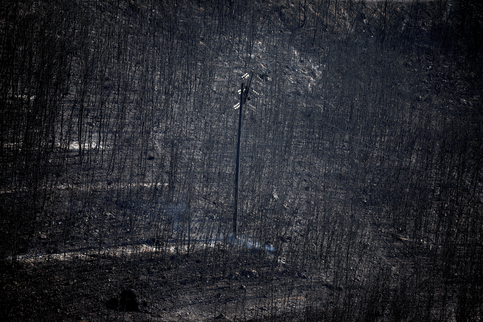 7월 25일 그리스 아테네 인근 네오스부자스에서 불 탄 나무들 사이에 전봇대 하나가 서 있다. [로이터=연합뉴스]