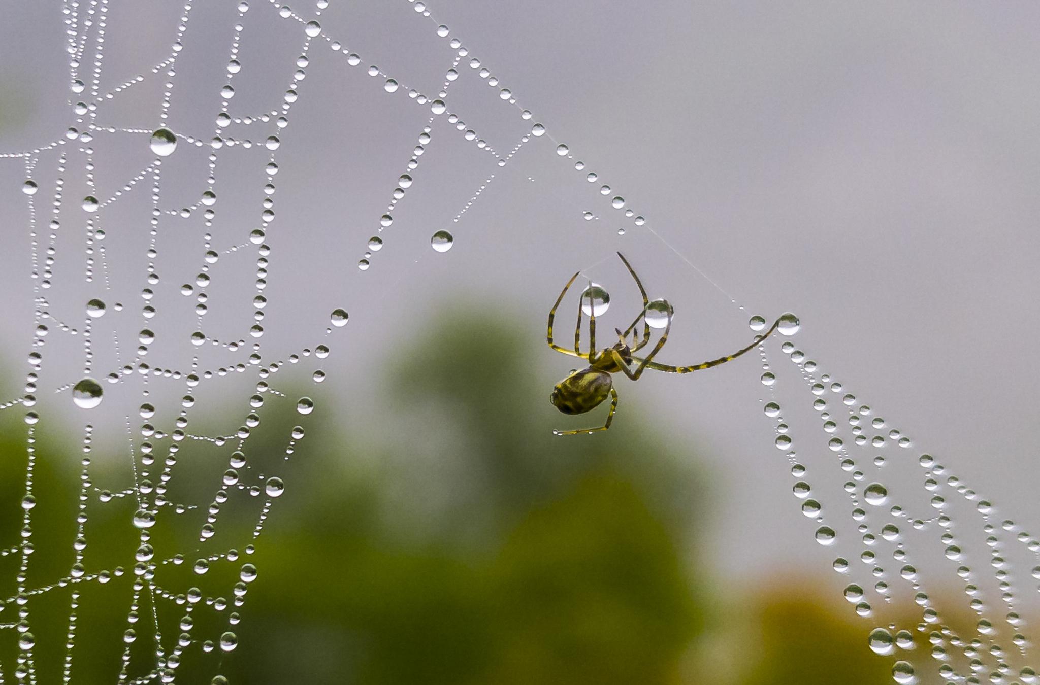 20180712 거미와 물방울