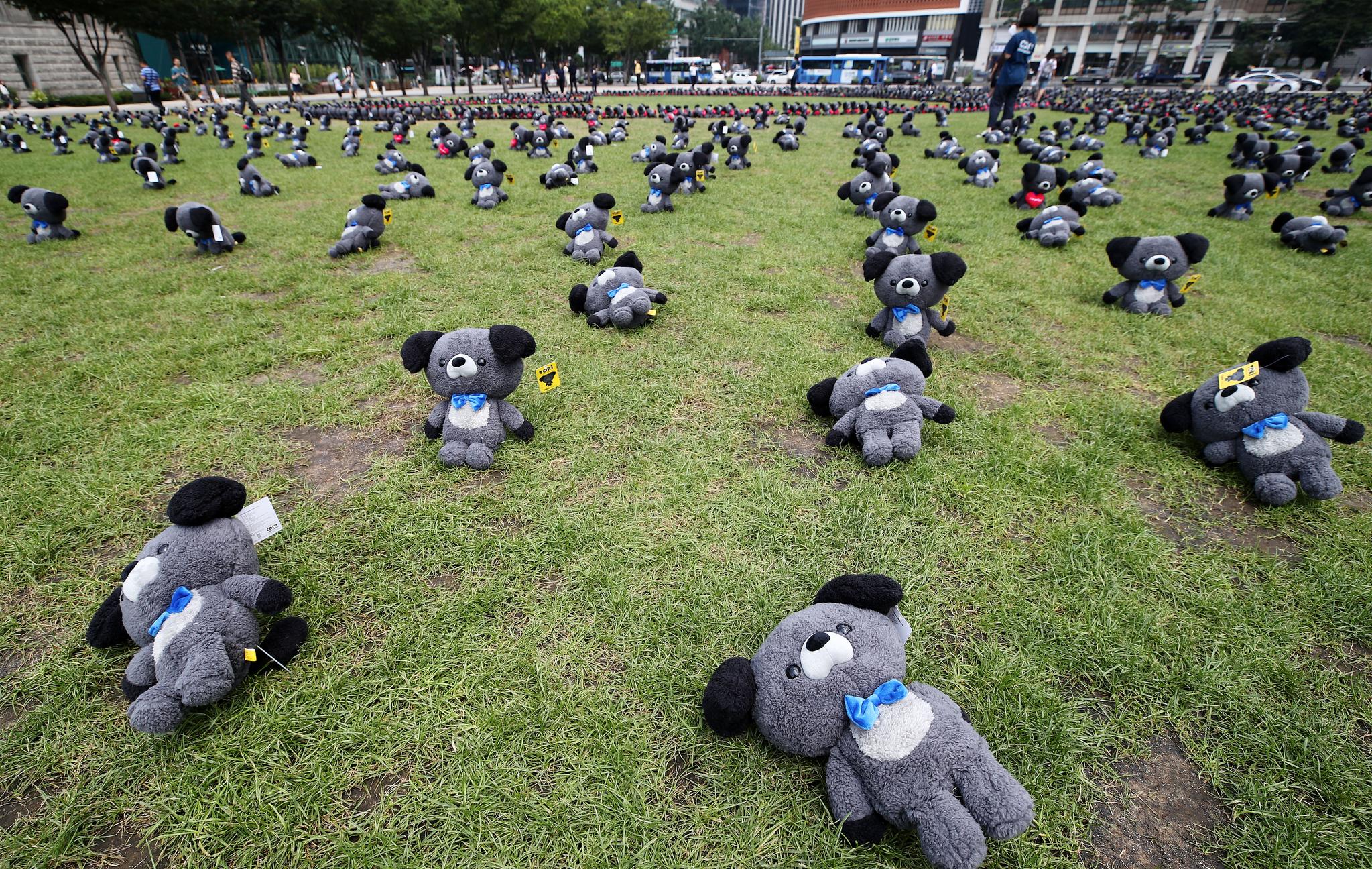 지난해 7월 17일 동물권단체 케어가 주최한 행사에 전시된 문재인 대통령의 반려견 '토리' 인형들. [연합뉴스]