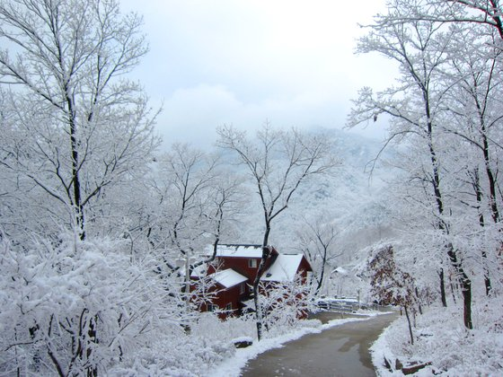자연휴양림은 겨울에 한산하다. 조금 추워도 설경을 만끽하며 이색 체험을 즐길 만한 휴양림이 의외로 많다. 사진은 충북 단양 황정산자연휴양림. [사진 국립휴양림관리소]