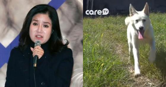 케어 박소연 대표(왼쪽)가 후원금 모금 영상에 출연시킨 개도 안락사했다는 주장이 나왔다. [뉴스1, 케어tv 유튜브 캡처]