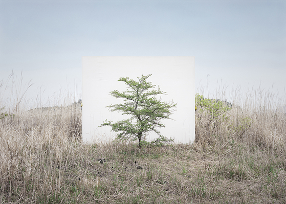 이명호, Tree... #9, 2017. [사진 갤러리현대]