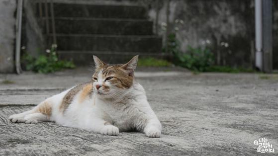한적한 거리나 공원 지역을 산책하다 보면 집 없이 떠돌아다니는 고양이를 많이 볼 수 있다. 요즘같이 추운 계절에는 주택 주변이나 지하주차장 등에도 흔히 머문다. [사진 영화 '나는 고양이로소이다' 스틸컷]