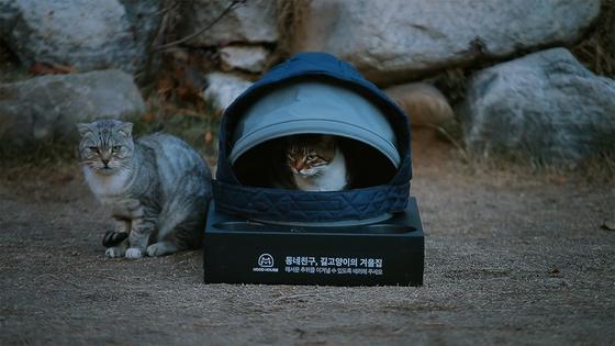 패딩 모자로 만든 길고양이 겨울집 '후드하우스'. 일부 동물 보호론자들은 길고양이도 서식지를 확보하고 생활할 권리를 주어야 한다고 주장하고 있으나, 통제가 완전히 이루어지지 않아 나쁜 영향을 줄 수 있다. <저작권자 ⓒ 1980-2018 ㈜연합뉴스. 무단 전재 재배포 금지.>