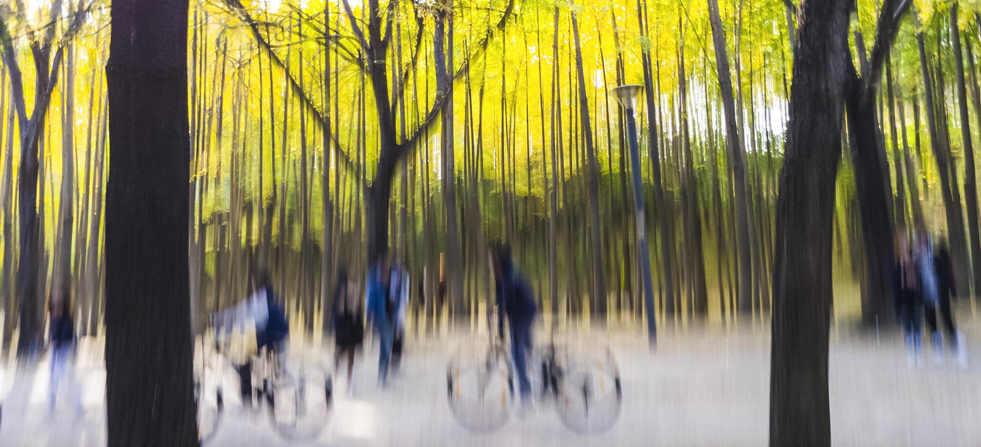 20171105 서울숲