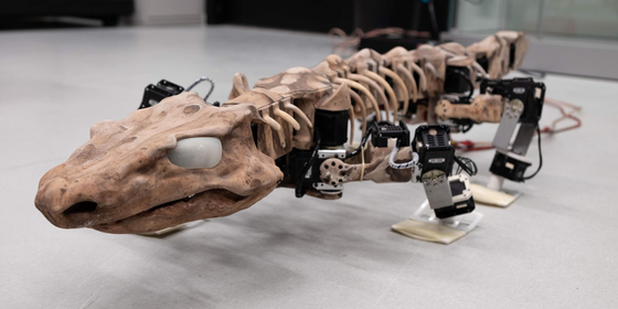 독일 훔볼트대를 비롯한 국제 공동 연구진이 고생대 페름기에 살았던 오로베이츠 팝스티의 움직임을 로봇으로 구현하는 데 성공했다. 척추동물의 진화에 대한 중요한 단서가 될 것으로 기대된다. [AP=연합뉴스]
