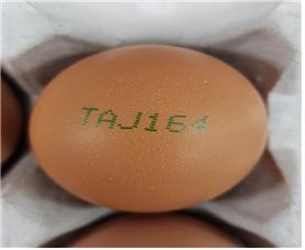 살충제 성분이 검출된 계란의 난각 코드는 'TAJ164'다. [농림축산식품부 제공]