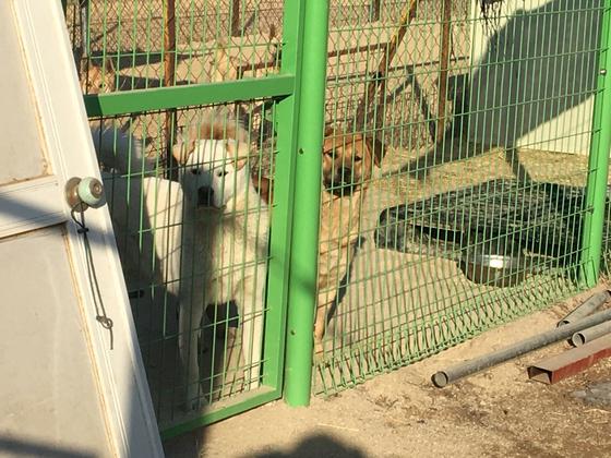동물권단체 '케어'의 내촌보호소에 개들이 수용돼있다. 윤상언 기자