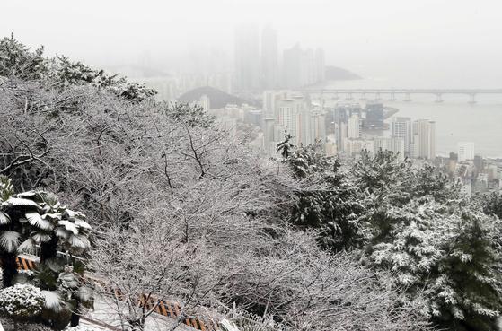 지난해 3월 부산 황령산에 내린 눈. [연합뉴스]