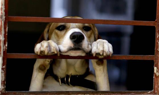 [뉴스 따라잡기] 유기견 안락사 없는 독일…개가 세금·버스비도 낸다