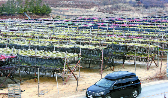 서울 눈 온 지 한달…59년 만의 '겨울 가뭄'