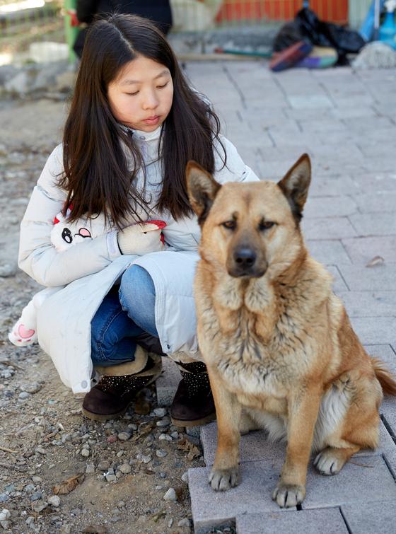 여덟 살 포메라니안 뽕야를 돌보고 있는 차연재 학생모델은 이 씨 집의 대형견과도 무리 없이 어울렸다.