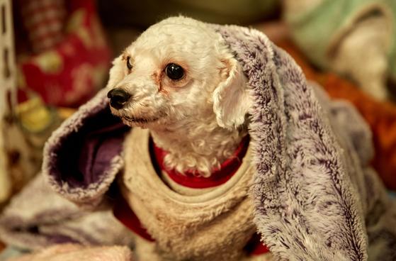소형견들은 부엌에 자리 잡았다. 이들은 스스로 이불 속에 파고 들어가 몸을 돌돌 말아 눕는다. 이 씨는 개들의 행동을 보고 기뻐했다.