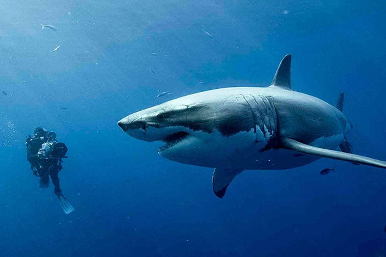 상어가 등장하는 영화 '47미터'의 한 장면 [중앙포토]